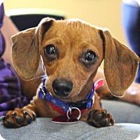 Adopt A Pet :: Slinky - Winters, CA