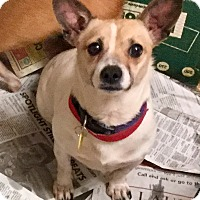 Adopt A Pet :: Little Man - Phoenix, AZ