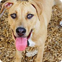 Adopt A Pet :: A - DELILAH - Augusta, ME