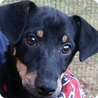 Adopt A Pet :: JR - Newnan, GA