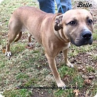 Adopt A Pet :: Belle - Texas - Fulton, MO