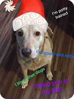 Labrador Retriever Mix Dog for adoption in Houston, Texas - Sandy
