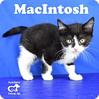 Adopt A Pet :: MacIntosh - Carencro, LA