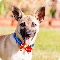 Adopt A Pet :: Elsa - San Ramon, CA