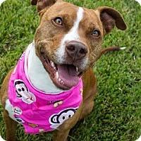 Adopt A Pet :: Canela - Vancouver, BC