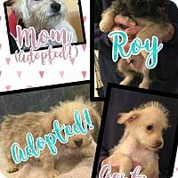 Adopt A Pet :: Roy - Scottsdale, AZ