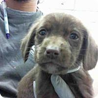 Adopt A Pet :: A282889 - Conroe, TX