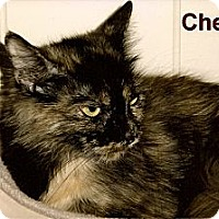Adopt A Pet :: Chelsea - Medway, MA