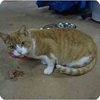 Adopt A Pet :: Simone - Wakinsville, GA