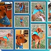Adopt A Pet :: Jasper - Marietta, GA