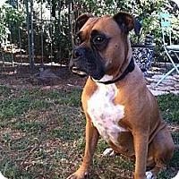 Adopt A Pet :: Sabrina - Santa Monica, CA