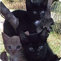 Adopt A Pet :: Robert - Harrisburg, NC