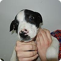 Adopt A Pet :: Greg - South Jersey, NJ