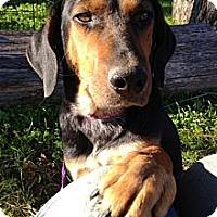 Adopt A Pet :: Suzie Q - Richmond, VA