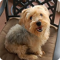 Adopt A Pet :: Kobe - Charlotte, NC