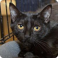 Adopt A Pet :: Emily - Irvine, CA