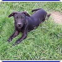 Adopt A Pet :: Denzel Reduced adopt fee - Sussex, NJ
