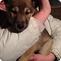 Adopt A Pet :: Mars - Saskatoon, SK