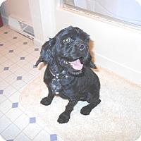 Adopt A Pet :: Rudy Rudolph -Adopted! - Kannapolis, NC