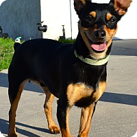 Adopt A Pet :: Ace - Simi Valley, CA