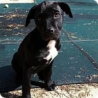 Adopt A Pet :: Monica - Baltimore, MD