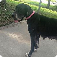 Adopt A Pet :: Helga - Sarasota, FL