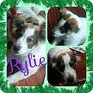 Adopt A Pet :: Susan's Pup Rylie