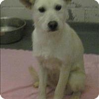 Adopt A Pet :: 16-01-0260b Betty - Dallas, GA