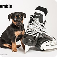Adopt A Pet :: Zambie - Irvine, CA