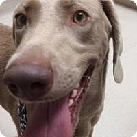 Adopt A Pet :: Sunny - Birmingham, AL
