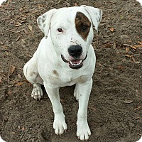 Adopt A Pet :: Patch - Williston, FL