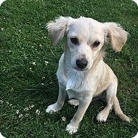Adopt A Pet :: Marco - Tumwater, WA