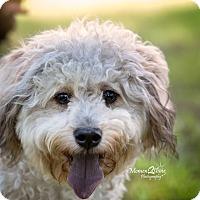 Adopt A Pet :: Precious - Daleville, AL