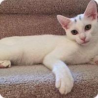Adopt A Pet :: Lakota - East Brunswick, NJ