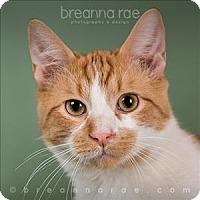 Adopt A Pet :: Pumpkin - Sheboygan, WI