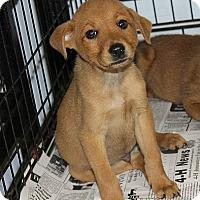 Adopt A Pet :: Sandy - Philadelphia, PA