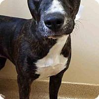 Adopt A Pet :: Lola - Oswego, IL