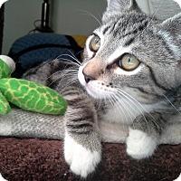 Adopt A Pet :: Kiara - Monrovia, CA