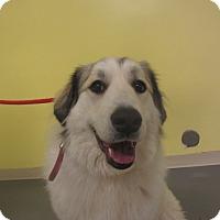 Adopt A Pet :: Delilah - Ridgway, CO