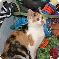 Adopt A Pet :: Sterling - Albemarle, NC