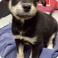 Adopt A Pet :: Jagger - Oswego, IL