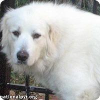 Adopt A Pet :: Zuri in NY - Beacon, NY