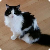 Adopt A Pet :: Conner - Herndon, VA