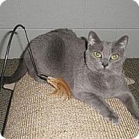 Adopt A Pet :: Josie - Watkinsville, GA