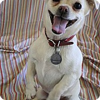 Adopt A Pet :: Nugget - Scottsdale, AZ