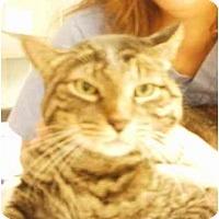 Adopt A Pet :: Maslow - Maywood, NJ