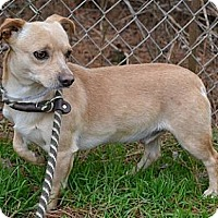 Adopt A Pet :: Theo - Athens, GA