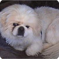 Adopt A Pet :: Captian - Virginia Beach, VA