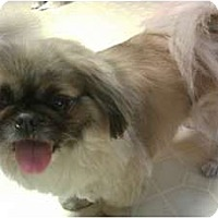 Adopt A Pet :: Teddy - Chantilly, VA