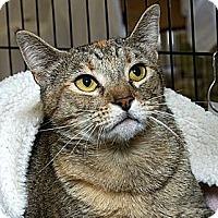 Adopt A Pet :: Punkinhead - Sacramento, CA